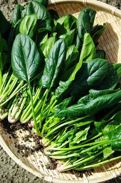 Spinach is a fast growing veg