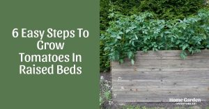 6 Easy Steps To Grow Tomatoes In Raised Beds