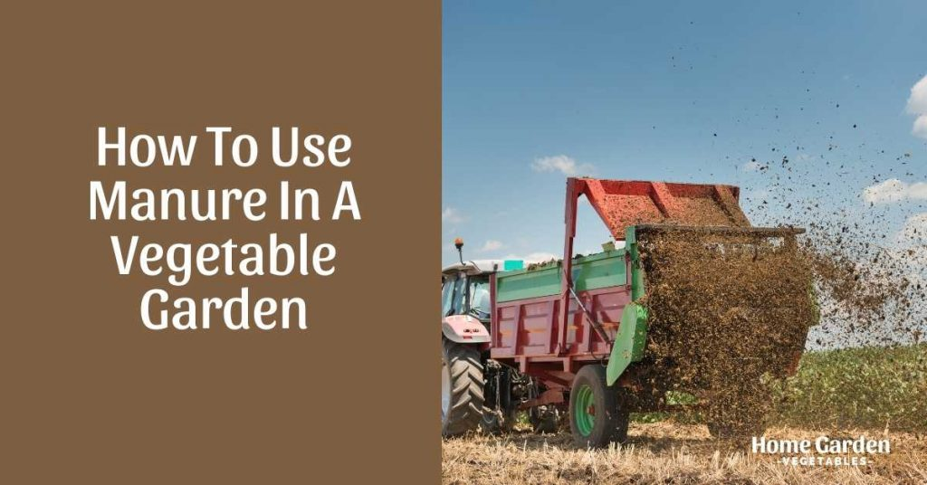 how to use manure in a vegetable garden