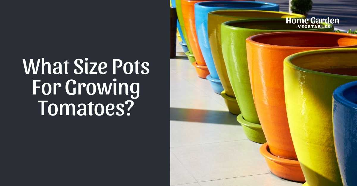 What Size Pots For Growing Tomatoes