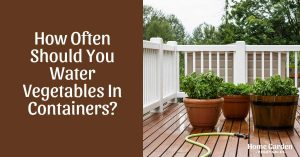 How Often Should You Water Vegetables In Containers?