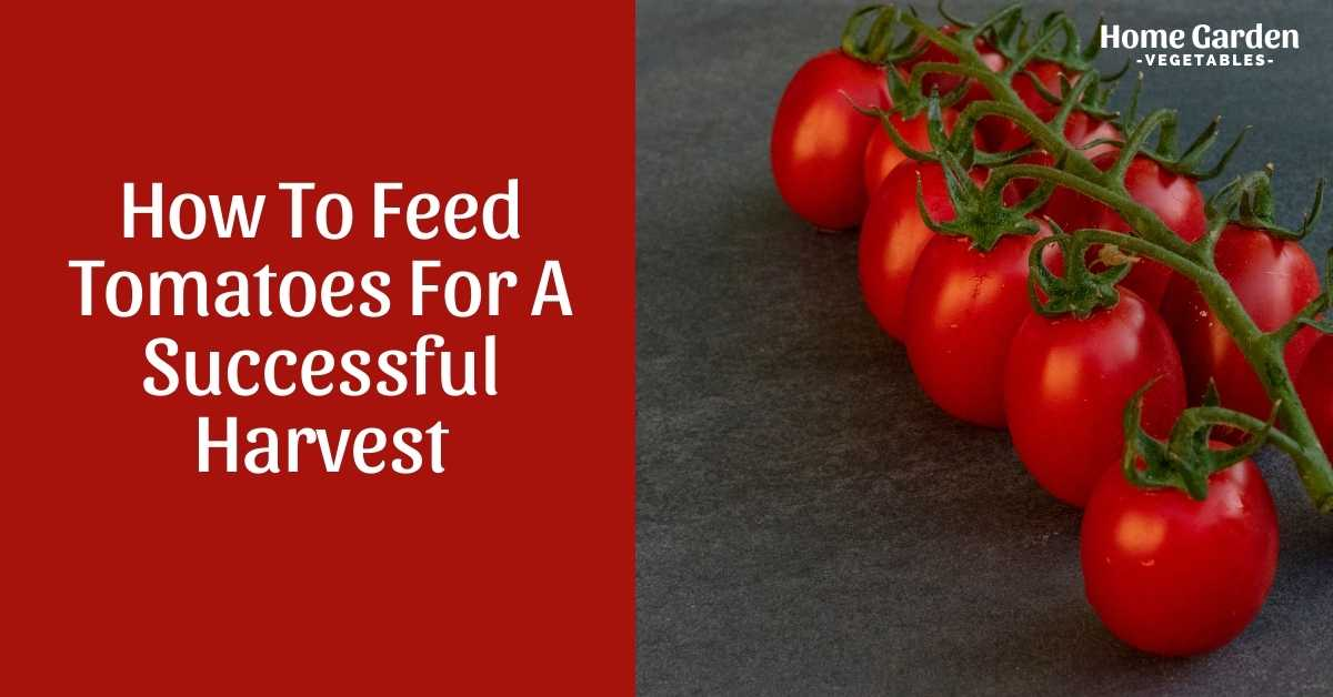 How To Feed Tomatoes