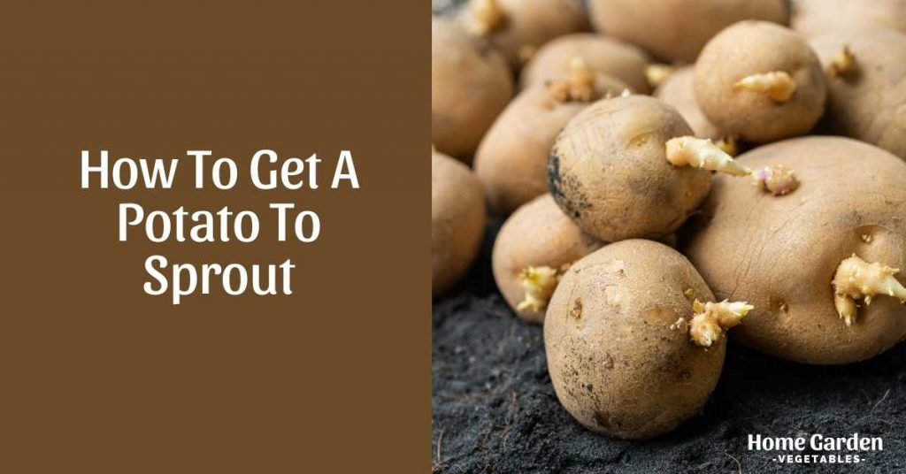 How To Get A Potato To Sprout