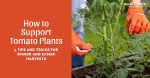 How to Support Tomato Plants: 5 Tips and Tricks for Bigger and Easier Harvests