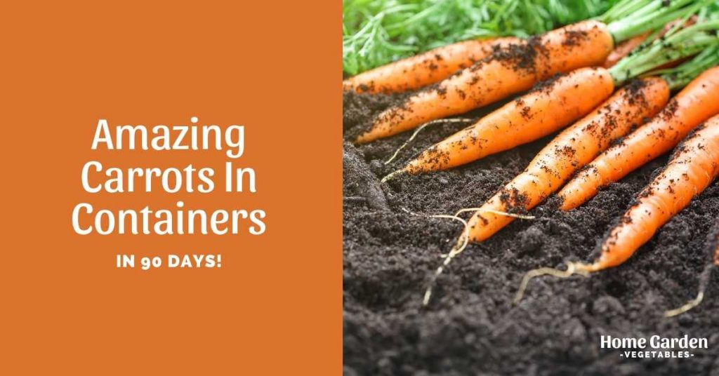 carrots in containers