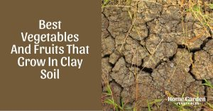 Definitive List of Fruit And Vegetables To Grow In Clay Soil