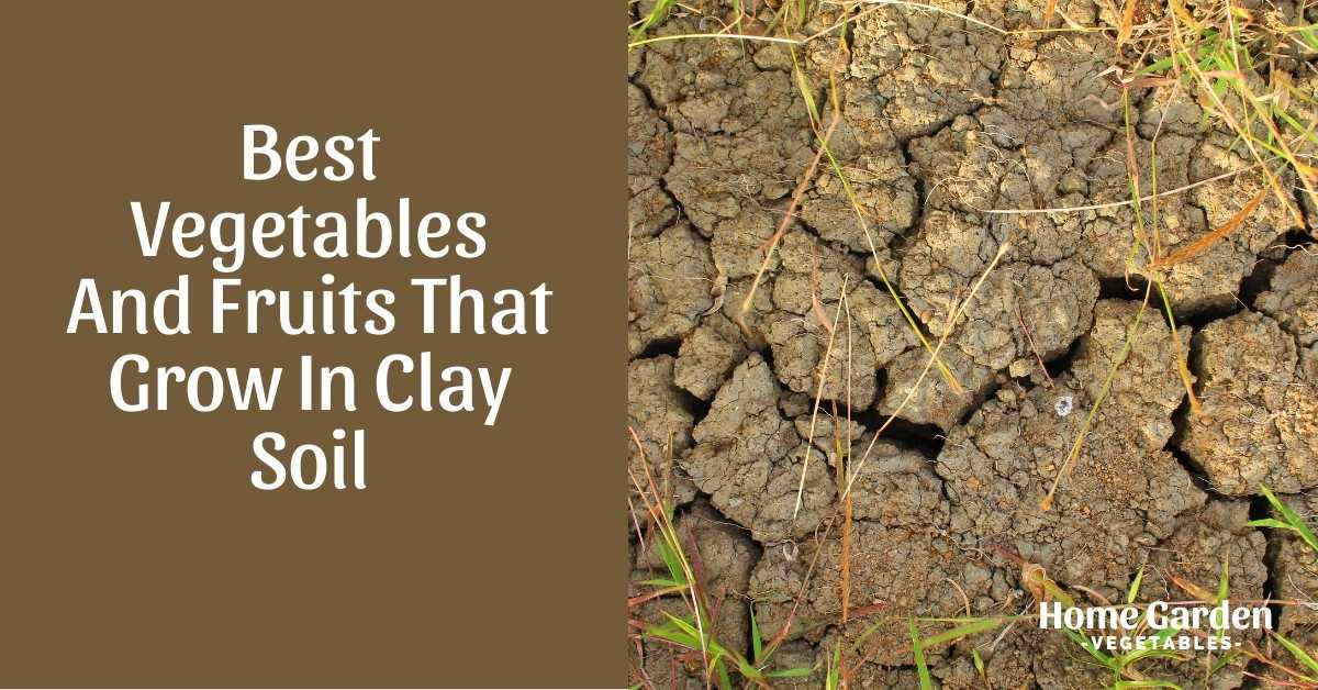 Vegetables And Fruits That Grow In Clay Soil