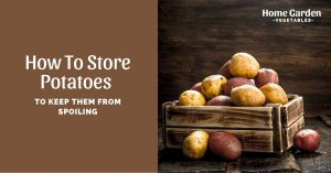 How To Store Potatoes To Keep Them from Spoiling