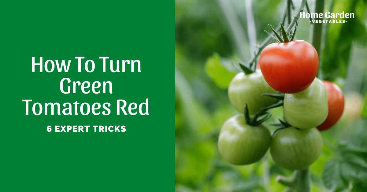 How To Turn Green TomatoesRed