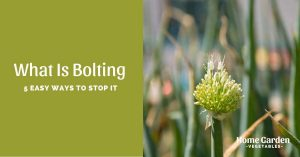 What Is Bolting - 5 Easy Ways To Stop It