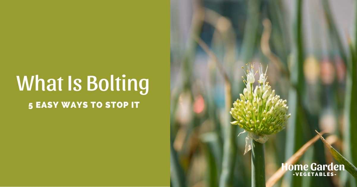 what is bolting