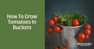 Garden In A Bucket: How To Grow Tomatoes In Buckets