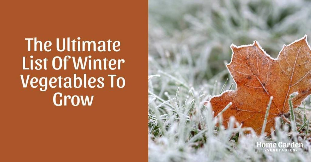Winter Vegetables To Grow