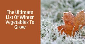 Winter Gardening: The Ultimate List Of Winter Vegetables To Grow