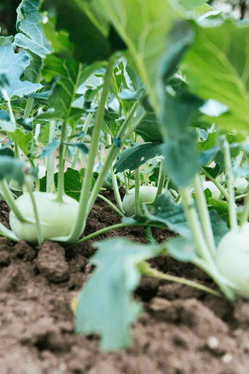 How To Protect Your Vegetable Plot From A Heatwave