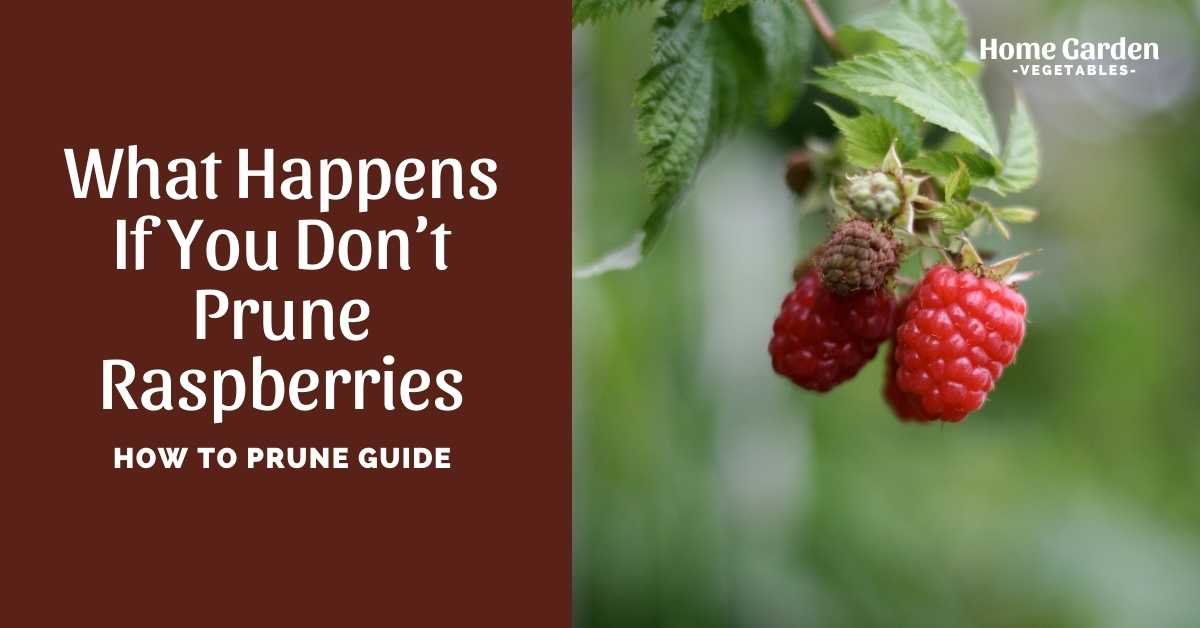 what happens if you don't prune raspberries
