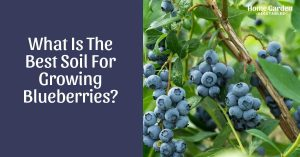 What Is The Best Soil For Growing Blueberries?