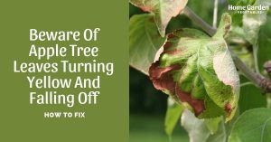 Beware Of Apple Tree Leaves Turning Yellow And Falling Off