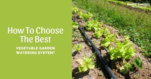 How To Choose The Best Vegetable Garden Watering System?
