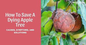 How To Save A Dying Apple Tree: Causes, Symptoms, And Solutions