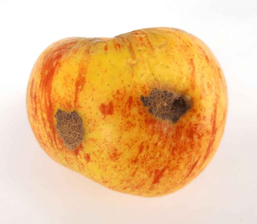 Can You Eat Apples With Apple Scab