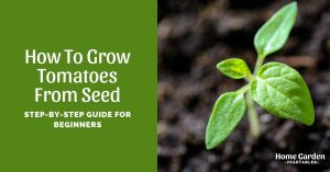 How To Grow Tomatoes From Seed: Step-By-Step Guide For Beginners
