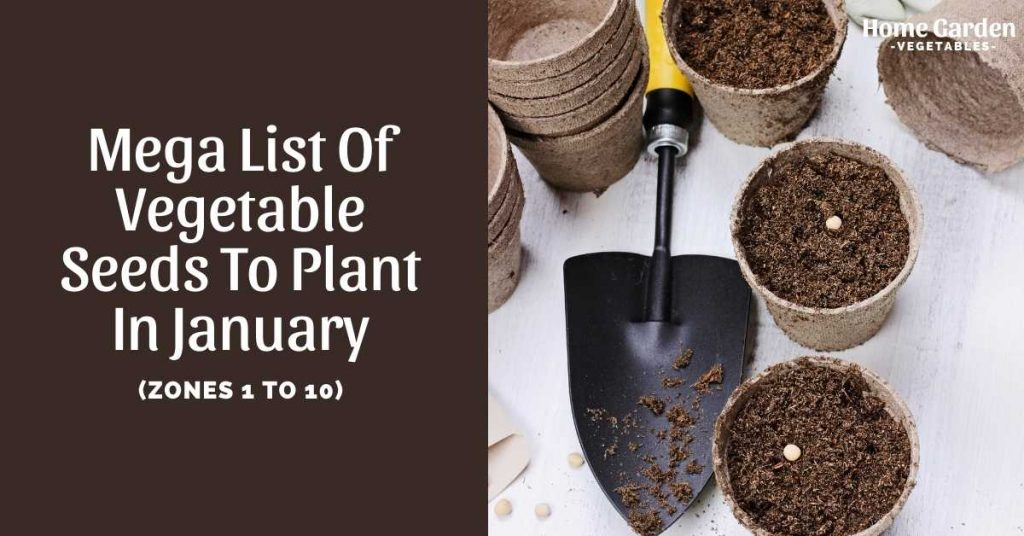 Vegetable Seeds To Plant In January