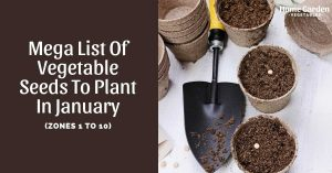 Mega List Of Vegetable Seeds To Plant In January (Zones 1 to 10)