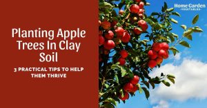 Planting Apple Trees In Clay Soil: 3 Practical Tips To Help Them Thrive