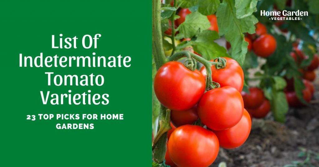 Indeterminate Tomato Varieties