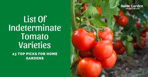 23 Top Indeterminate Tomato Varieties To Try!