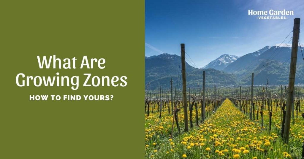 What Are Growing Zones