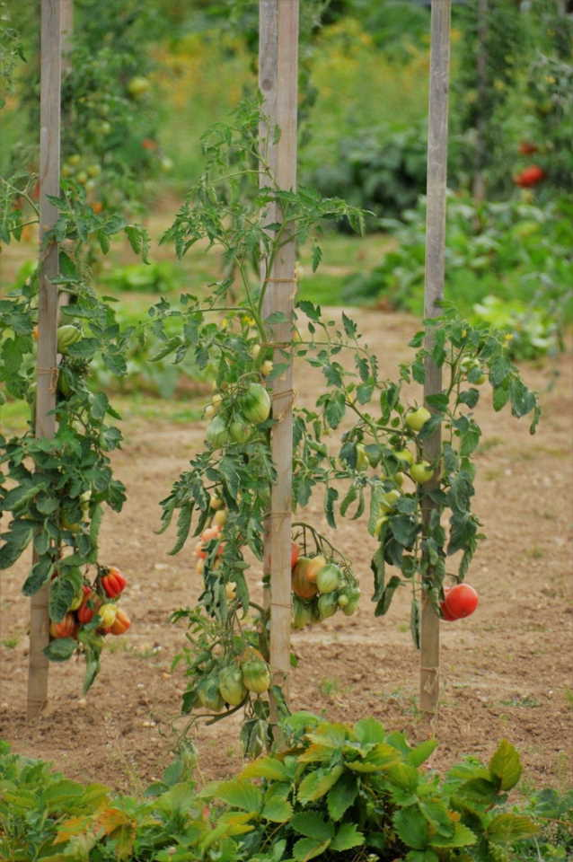 what fruit and vegetables to grow in Queensland