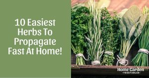 10 Easiest Herbs To Propagate Fast At Home!