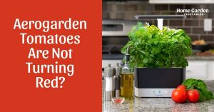 Why Aerogarden Tomatoes Are Not Turning Red? 5 Reasons Your Tomatoes Are Not Ripening