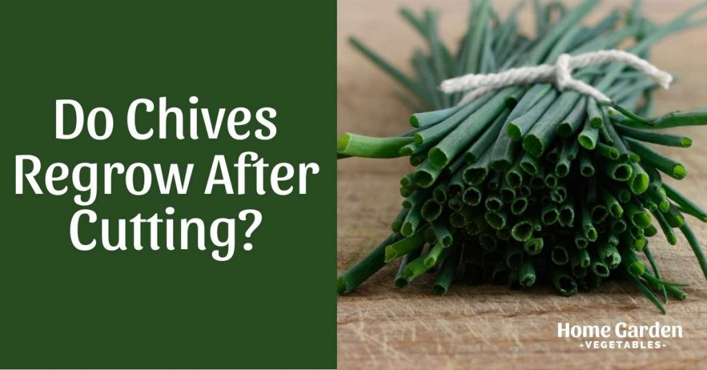 Do Chives Regrow After Cutting