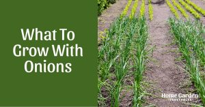 What To Grow With Onions!