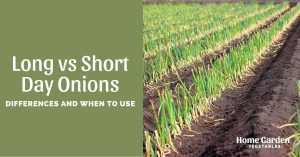 Long VS Short Day Onions - How To Choose?