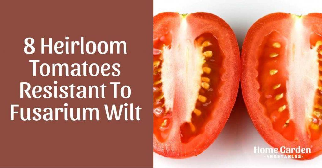 Heirloom Tomatoes Resistant To Fusarium Wilt