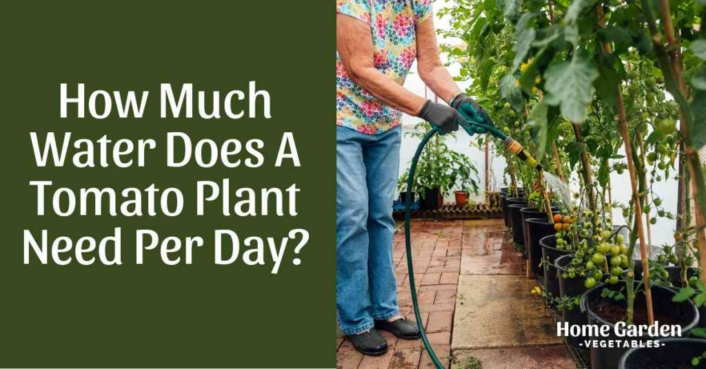 How Much Water Does A Tomato Plant Need