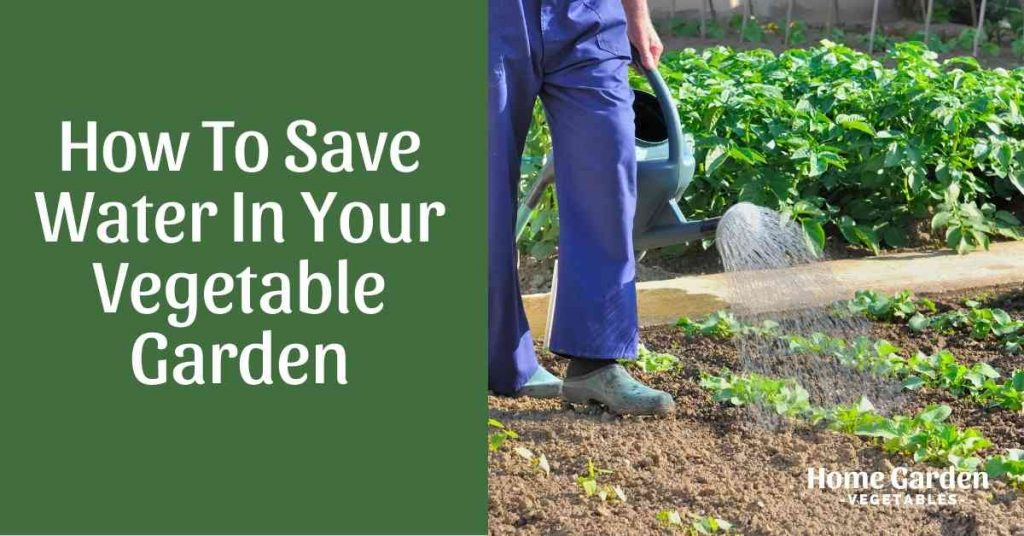 How To Save Water In Your Vegetable Garden