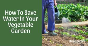 How To Save Water In Your Vegetable Garden - 17 Handy Tips