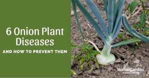 6 Onion Plant Diseases And How To Prevent Them