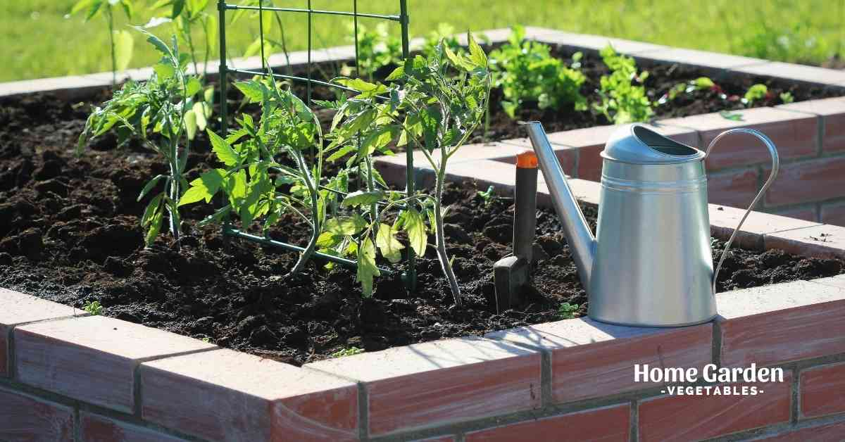 how many tomato plants per square foot