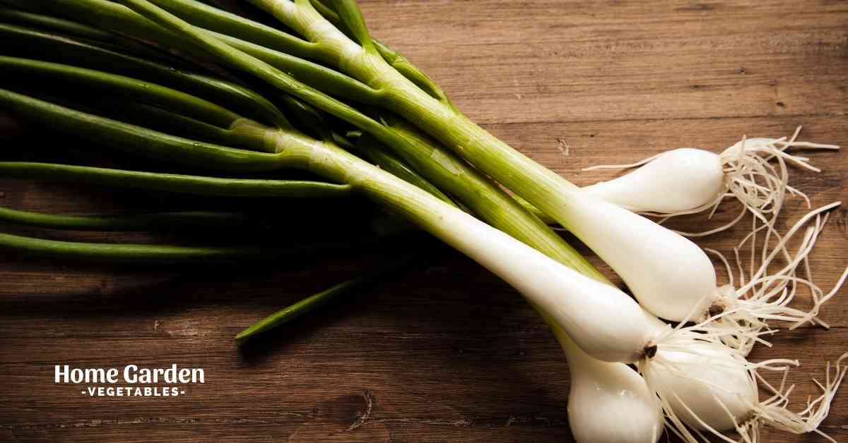 Do Spring Onions Grow Into Onions
