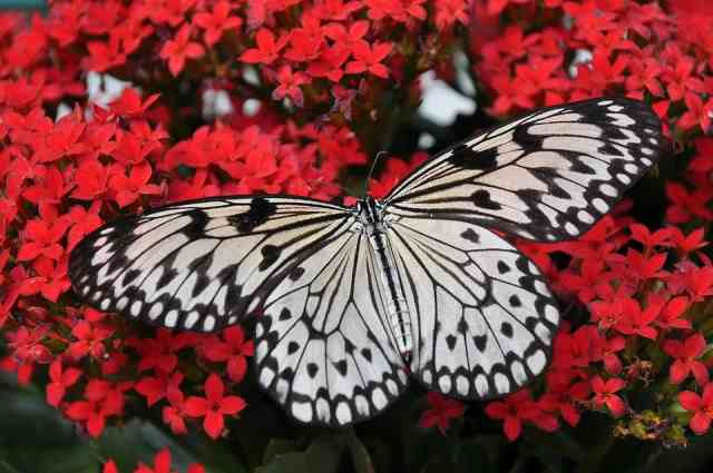 What Does Self-Pollination Mean
