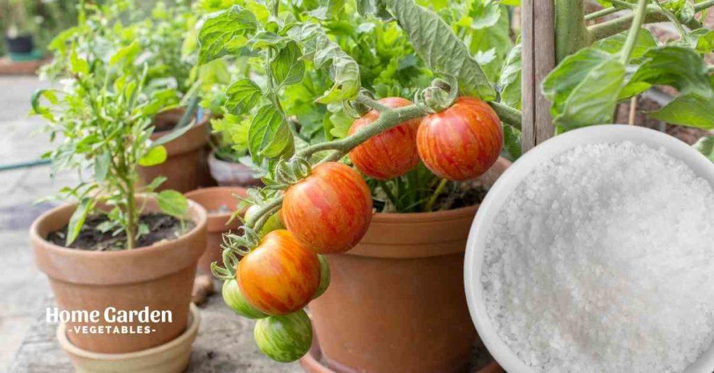 Epsom Salt For Tomato Plants
