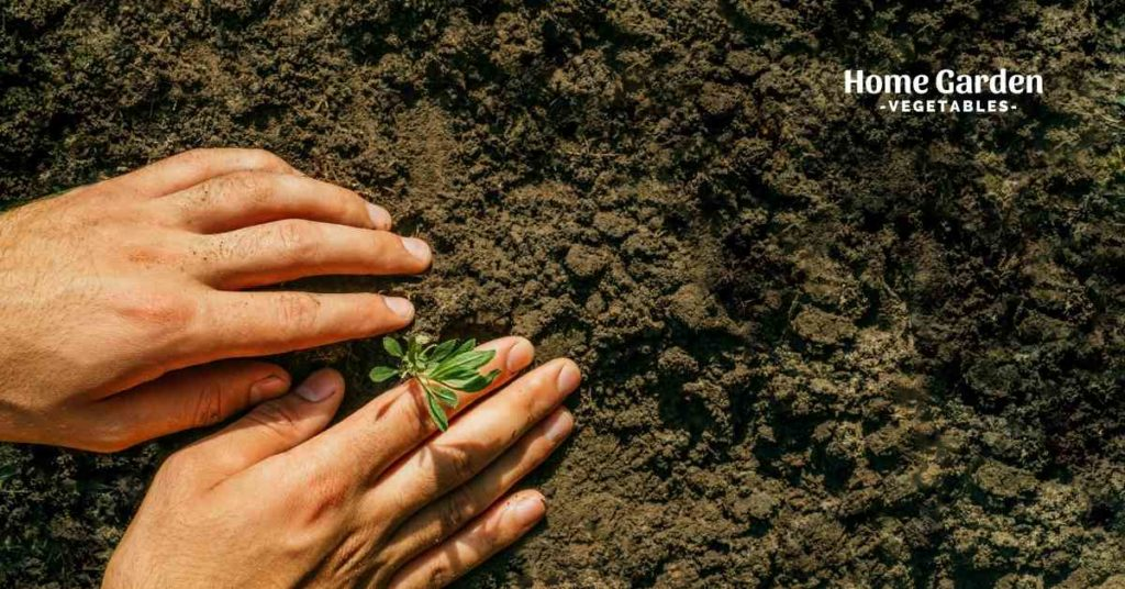 Everything There Is To Know About Acidic Soil