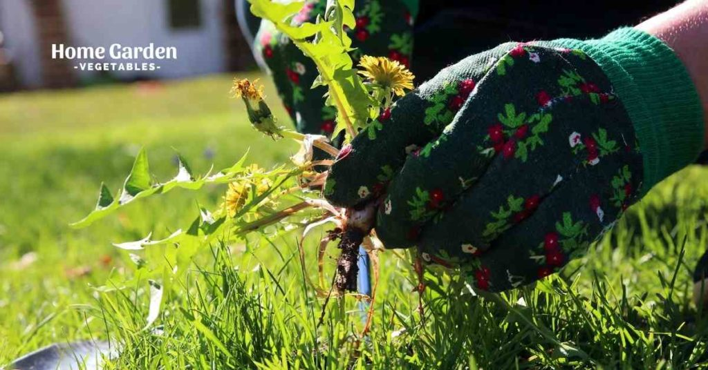 How To Get Rid Of Weeds In Vegetable Garden Naturally