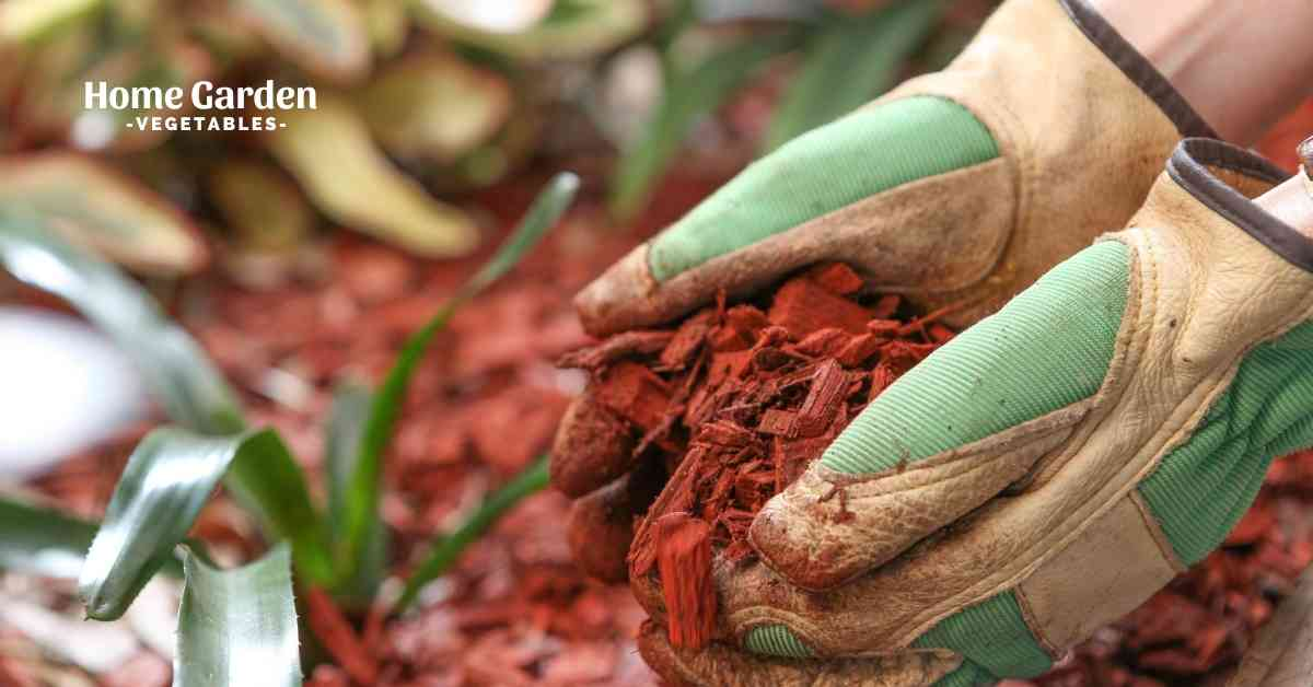 How To Mulch The Soil